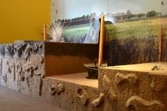 Muestra Arqueológica