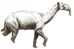 Macrauquenia
